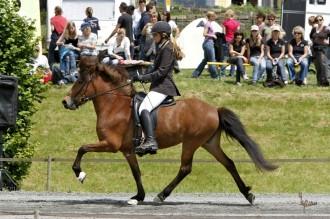 Embla - Zucht - 1.Platz - Islandpferdezucht Gut Tiergarten
